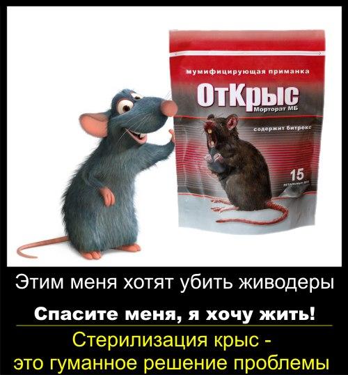 Агитка: стерилизация крыс