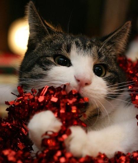 Животные - кошки
