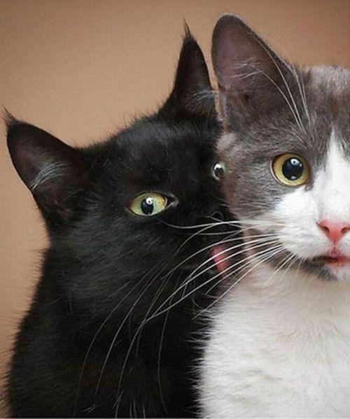 Умильные котята