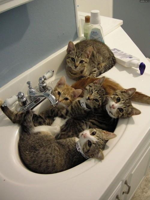 Классные коты