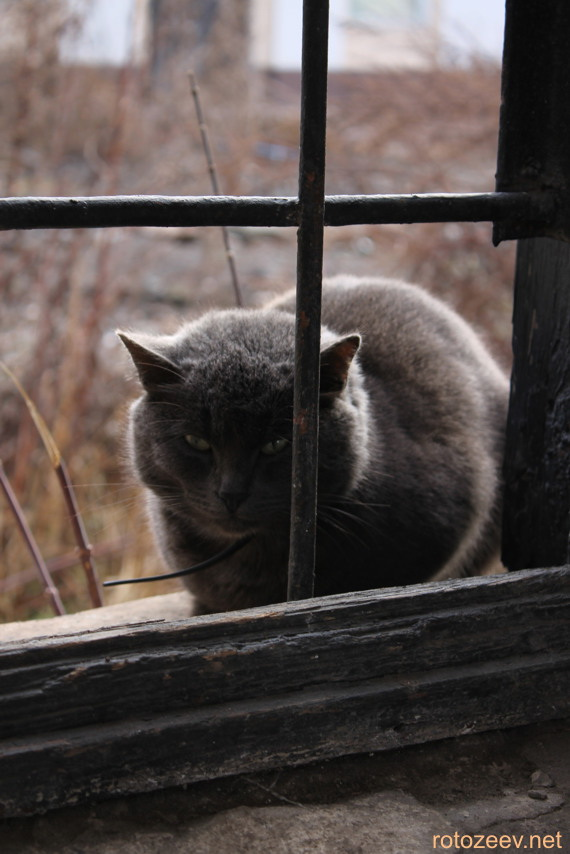 Фотография кота за решеткой