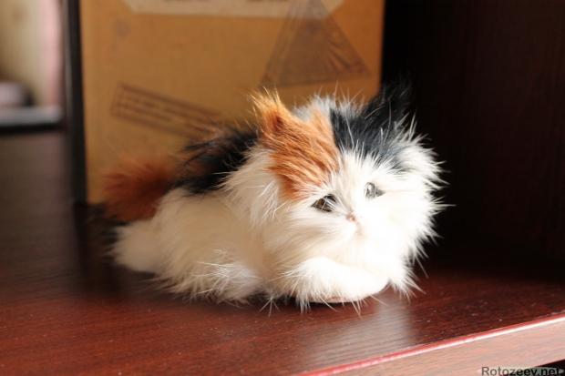 Белгород, кафе Пыж - коты на полке