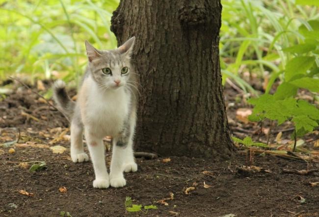 dvor_cats_2