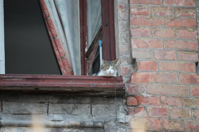 Коты в Харькове