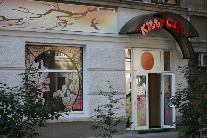Kitty Cafe в Харькове