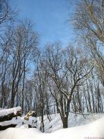 Лес возле речки