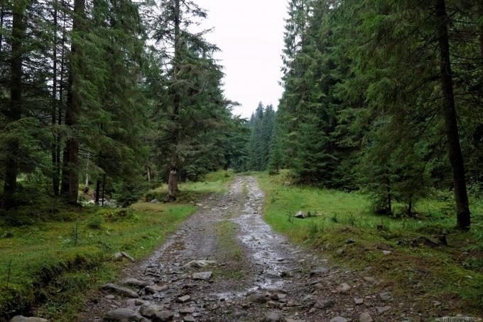 дорога у лісі (Яблуницьке ПНДВ)