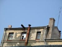На крыше дома...