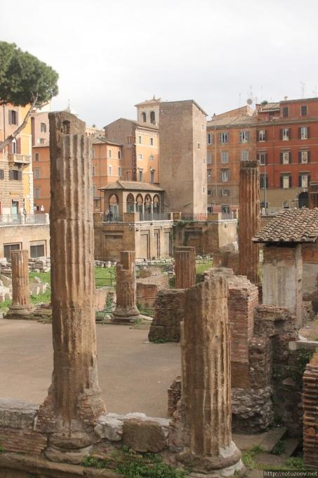 Рим, площадь Torre Argentina, коты