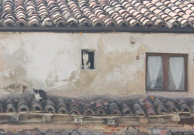 Бургос, Испания. Коты в домах.