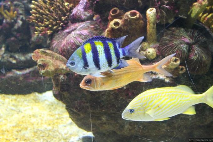 barcelona_aquarium_03