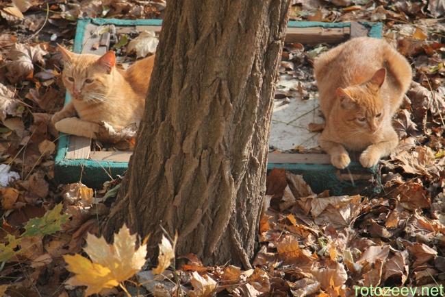 Харьковские коты