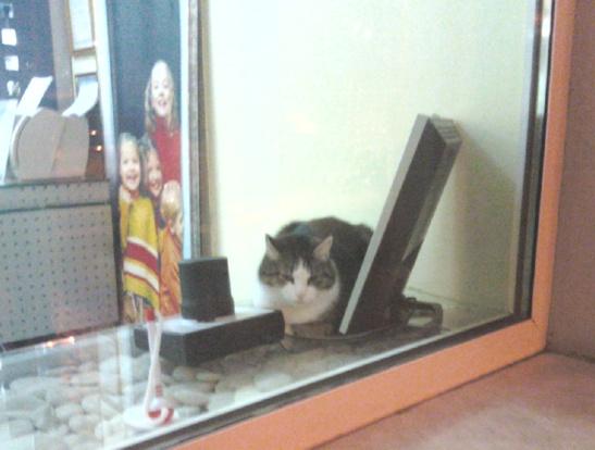кот в витрине