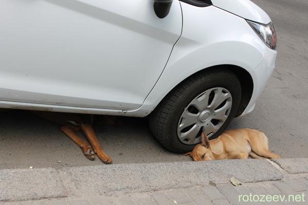 Собаки на улице под машиной